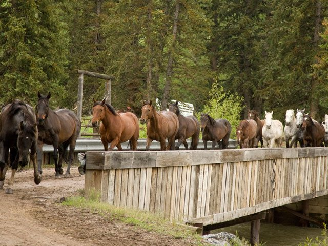 Welcome to Wyoming's Best Dude Ranch! - Spotted Horse Ranch